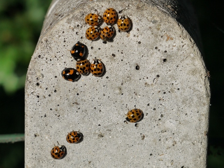 Inhabitants of Ladybird Dell