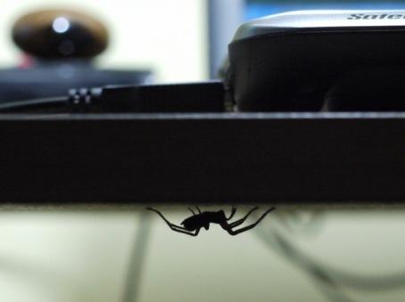 Tiggy under the desk