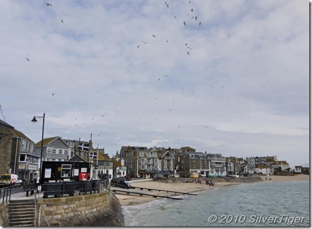 The gulls were busy in the sky above St Ives